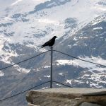 Aletschgletscher 3