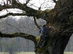 ein Baumnest
